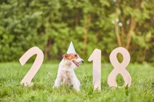 Trends 2018: dit brengt het nieuwe jaar